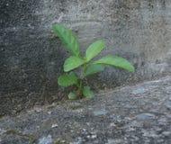 Drzewo na betonie Zdjęcie Royalty Free