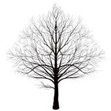 Drzewo na białej tło symetrii Zdjęcie Royalty Free