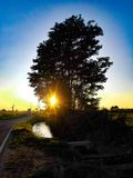 Drzewo na brzeg obraz royalty free