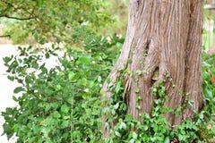 Drzewo na brzeg rzeki Zdjęcia Stock