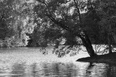 Drzewo na brzeg w czarny i biały Fotografia Stock