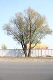 Drzewo na fabryce Fotografia Stock