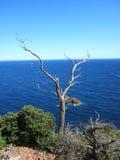 Drzewo na falezie Obraz Royalty Free