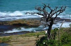 Drzewo na falezie Zdjęcia Stock