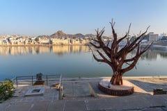 Drzewo na ghats przy Pushkar jeziorem w Rajasthan indu zdjęcie royalty free