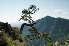 Drzewo na halnej krawędzi zdjęcia royalty free