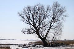 Zimy drzewo obrazy stock