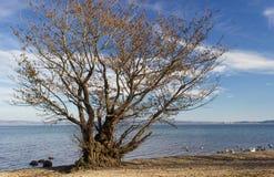 Drzewo na jeziorze Zdjęcia Stock
