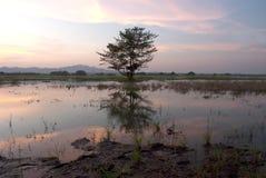 Drzewo na jeziorze w zmierzchu. Zdjęcia Royalty Free