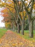 Drzewo na Karlovy Zmienia Zdjęcia Royalty Free