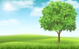 Drzewo na krajobrazowym tle royalty ilustracja