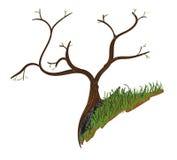 Drzewo na krawędzi Obraz Stock