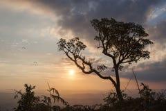 Drzewo na krawędzi góry Obraz Stock