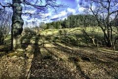 Drzewo na landcape zdjęcia royalty free