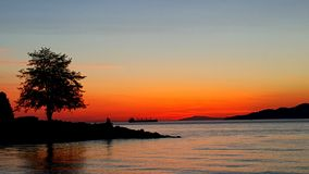Drzewo na morzu fotografia stock