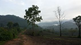 Drzewo na mountian Fotografia Royalty Free