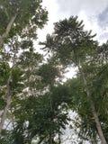 Drzewo na niebie zdjęcia stock