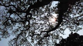 Drzewo na niebo sylwetce 2 obrazy royalty free
