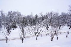 Drzewo na śniegu Zdjęcia Stock