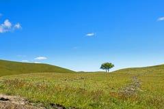 Drzewo na obszarach trawiastych Obraz Stock