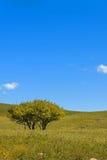 drzewo na obszarach trawiastych Obraz Royalty Free
