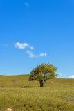 Drzewo na obszarach trawiastych Zdjęcia Stock