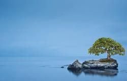 Drzewo na orck na odosobnionym morzu Zdjęcie Stock