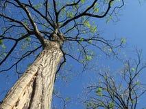 Drzewo na pięknym niebieskim niebie Obrazy Royalty Free