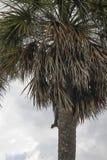 Drzewo na plaży Zdjęcie Stock