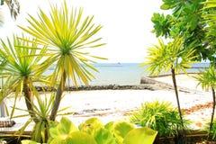 Drzewo na plaży w słonecznym dniu Fotografia Royalty Free