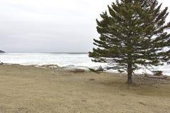 Drzewo na plaży fotografia stock