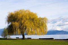 drzewo na plaży Obraz Stock