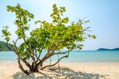 Drzewo na plaży zdjęcia royalty free