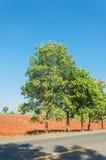 Drzewo na poboczu Obrazy Royalty Free