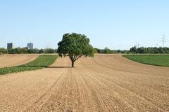 Drzewo na polu Fotografia Royalty Free