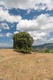 Drzewo na polu z niebieskim niebem Fotografia Royalty Free