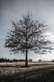 Drzewo na środku podwórze Zdjęcia Royalty Free