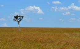 Drzewo na sawannie Zdjęcia Stock