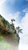 Drzewo na skale Obraz Stock