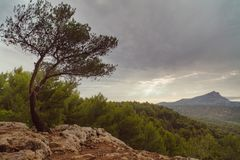 Drzewo na skale przechyla od wiatru obrazy royalty free