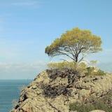 Drzewo na skale przed morzem fotografia royalty free