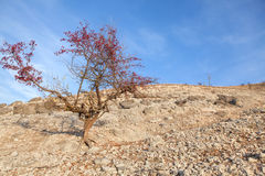 Drzewo na skalistym terenie Zdjęcia Royalty Free