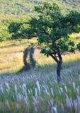 Drzewo na sposobie Zdjęcie Royalty Free