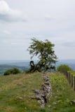Drzewo na stronie góra Zdjęcie Stock
