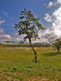 Drzewo na tła FEFU uniwersytecie Obrazy Stock