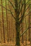 Drzewo na tle las Fotografia Royalty Free