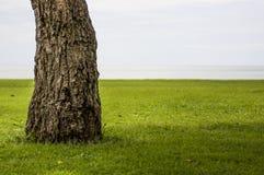 Drzewo na Trawie fotografia stock