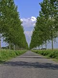 drzewo na ulicy Obrazy Royalty Free