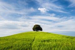 Drzewo na wierzchołku mały zielony wzgórze Obraz Royalty Free