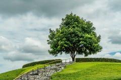 Drzewo na wierzchołku Zdjęcia Stock